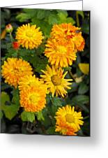 Merry Marigolds Greeting Card