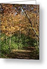 Merwin Autumn Trail Bend Greeting Card