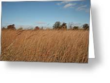 Merwin Prairie Autumn II Greeting Card