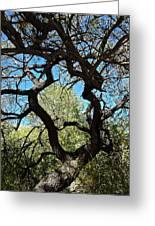 Mesquite Window Greeting Card