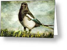 Message From The Magpie Greeting Card by Belinda Greb
