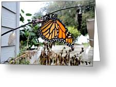 Metamorphosis Of The Monarch Greeting Card