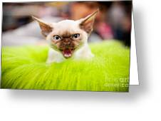 Mew Kitty Funny Mad Face Greeting Card