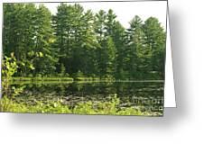 Mew Lake Algonquin Park Greeting Card