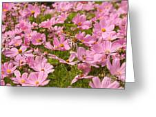 Mexican Aster Flowers 1 Greeting Card