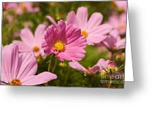 Mexican Aster Flowers 2 Greeting Card