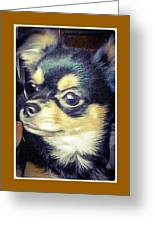 Mexican Chihuahua Puppy Greeting Card