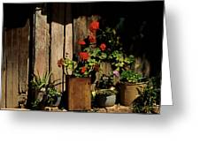Mexican Geraniums Greeting Card