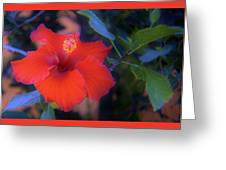 Mexican Hibiscus Greeting Card