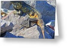 Mexican Iguana Greeting Card