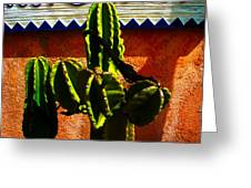 Mexican Style  Greeting Card by Susanne Van Hulst