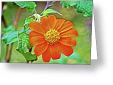 Mexican Sunflower Along White Pine Trail In Kent County, Michigan  Greeting Card
