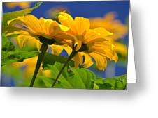 Mexican Sunflower Tree Greeting Card