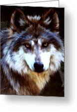 Mexican Wolves Greeting Card