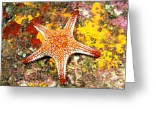 Mexico, Gulf Sea Star Greeting Card