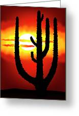 Mexico Sunset Greeting Card