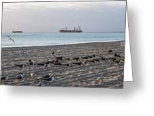 Miami Beach Flock Of Birds Sunrise Greeting Card