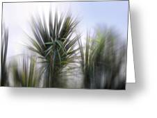 Miami Palms Greeting Card