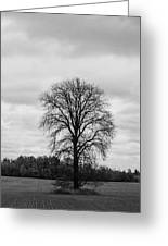 Michigan Lonley Tree  Greeting Card