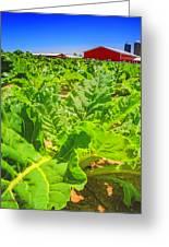 Michigan Surgar Beet Farming Greeting Card
