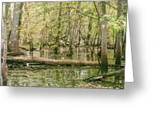 Michigan Swamp Greeting Card