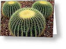Mickey Mouse Barrel Cactus Greeting Card