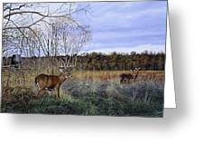 Take Out - Deer Greeting Card