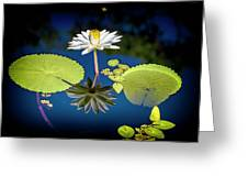 Mid Day Water Lily Reflection Greeting Card
