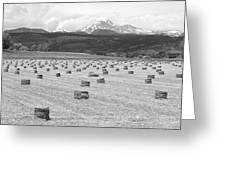 Mid June Colorado Hay  And The Twin Peaks Longs And Meeker Bw Greeting Card