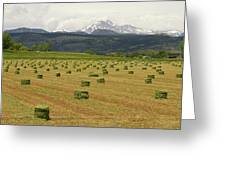 Mid June Colorado Hay  And The Twin Peaks Longs And Meeker Greeting Card