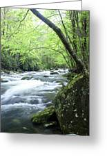 Middle Fork River Greeting Card