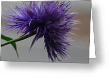 Midnight Blue 16-01 Greeting Card