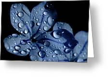 Midnight Dew Greeting Card