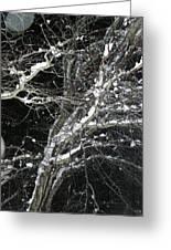 Midnight Snow 13 Greeting Card