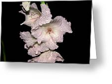 Midnite Aroma Pink Greeting Card