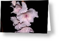 Midnite Aroma Purple Greeting Card