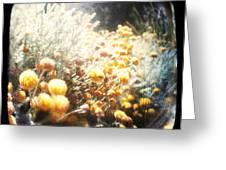 Midsummer Greeting Card