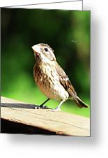 Midwest Bird Portrait Greeting Card
