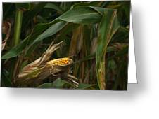 Midwest Harvest Greeting Card