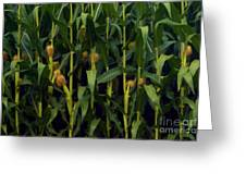 Midwest Silk Greeting Card