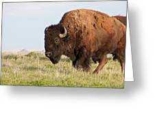 Mighty American Bison Greeting Card