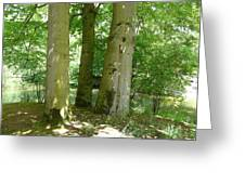 Mighty Beech Trees Greeting Card