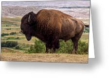 Mighty Bison Greeting Card