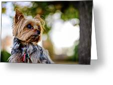 Mighty Dog Greeting Card