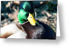Mighty Duck Greeting Card