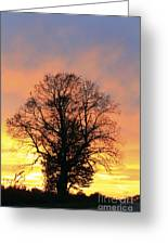 Mighty Oak At Sunset Greeting Card
