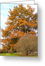 Mighty Oak In Autumn Greeting Card