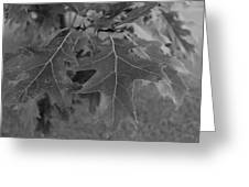Mighty Oak Greeting Card