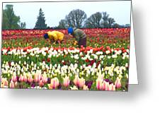 Migrant Workers In The Tulip Fields Greeting Card