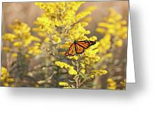 Migrating Monarch Butterfly Moses Cone Memorial Park North Carolina Greeting Card